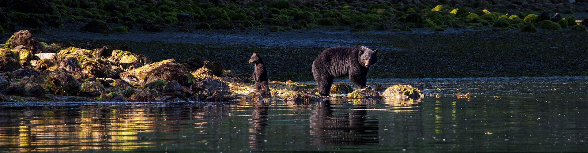 moederbeer met haar jong in canada