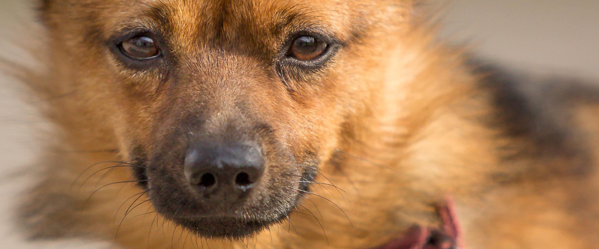 Honden fotografie amsterdam Honden fotograaf