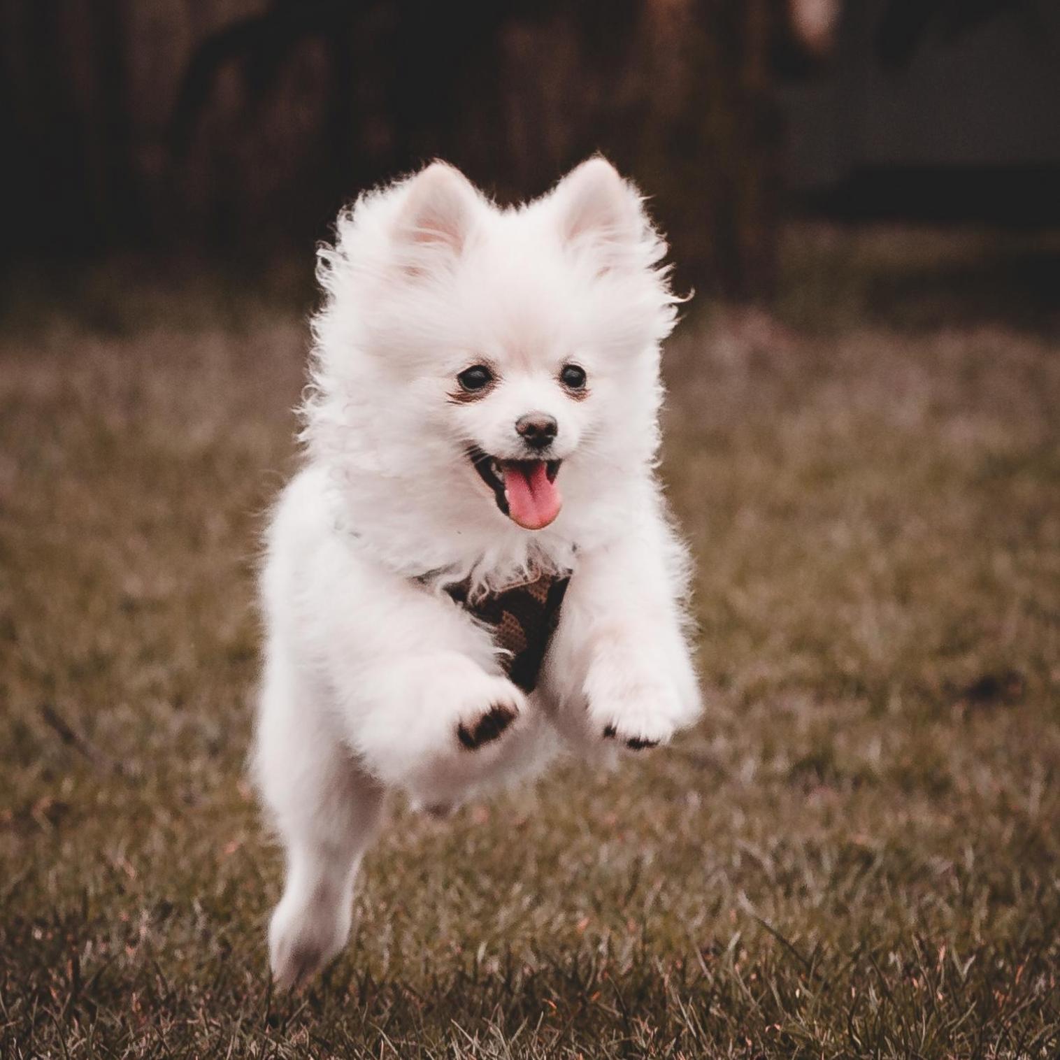 Honden-fotografie-amsterdam hondenfotograaf