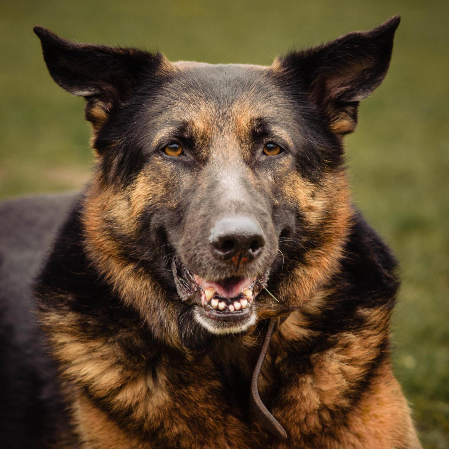 Hondenfotograaf-hondenfotografie-haarlem
