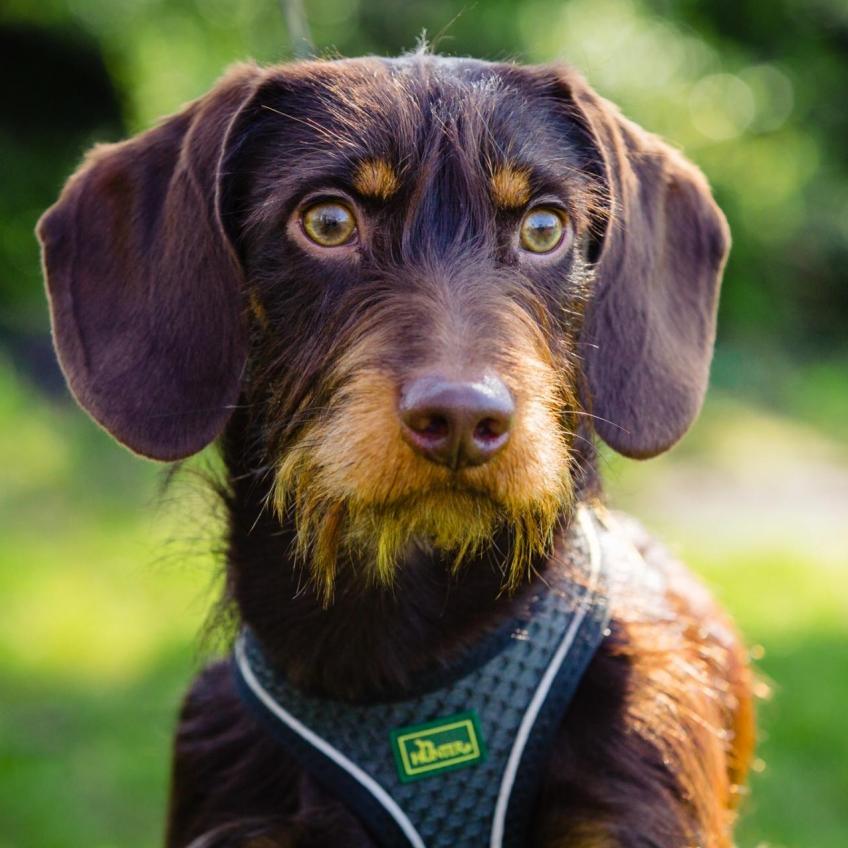 Hondenfotografie-hondenportret-noord-holland