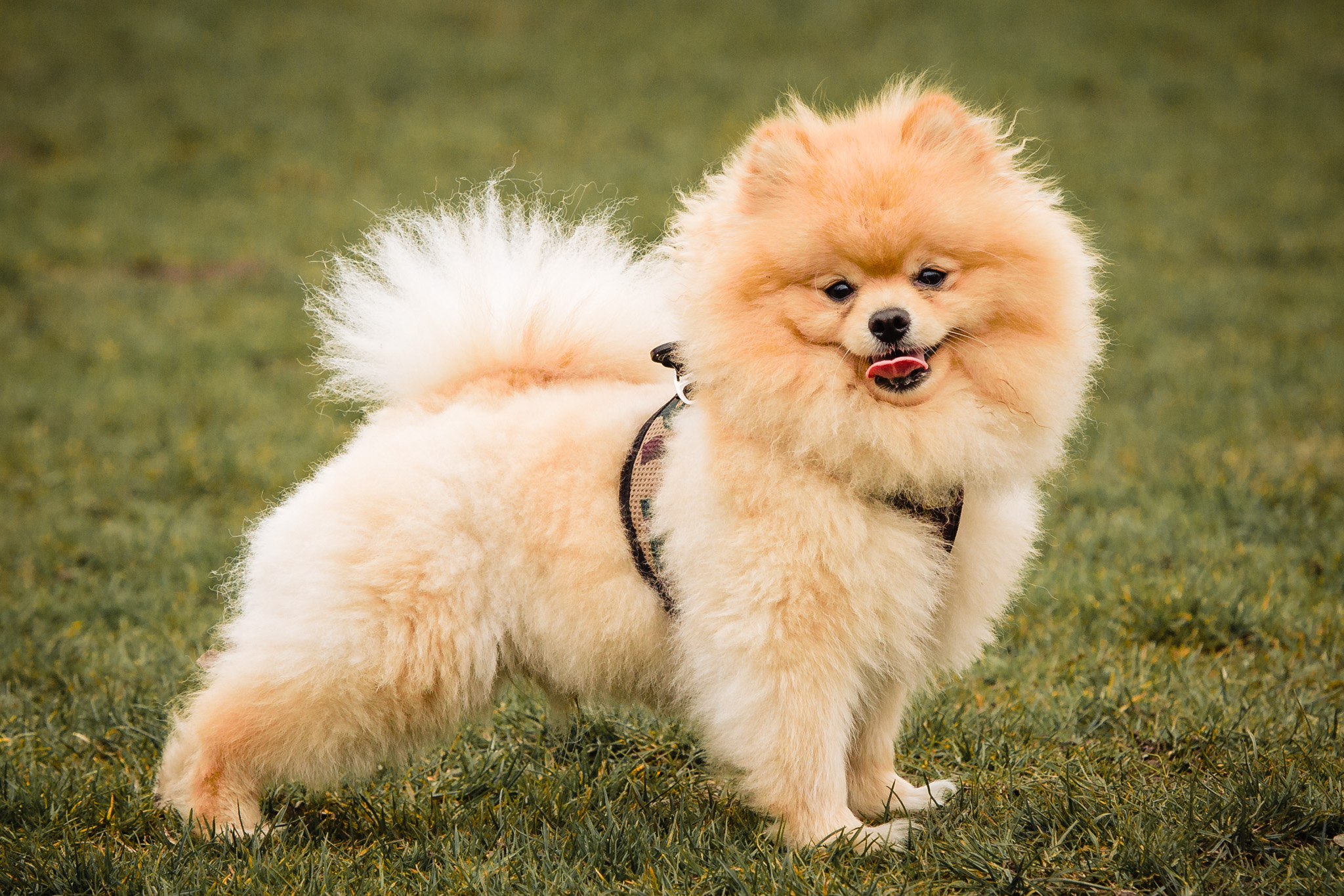 mini-shoot huisdier hond fotoshoot huisdier