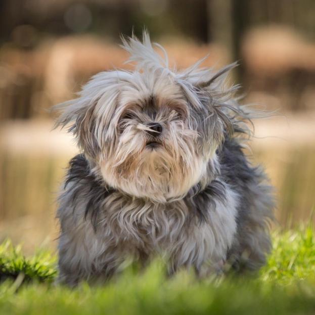 Hondenfotografie-hondenportret-huisdierenfotografie 001